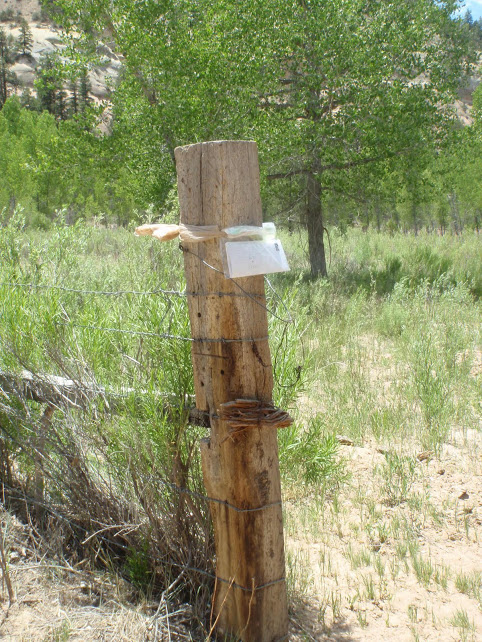 With no internet or phone, I sealed outgoing mail in a plastic bag and bound it to this post. The owner picked up as he rode his horse past, pushing cattle up the mesa.